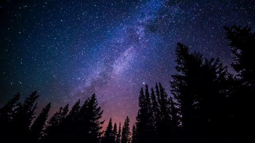Starry Night over trees